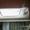 Крышка багажника Тойота Лэнд Крузер 100 #24322