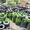 Шины для спецтехники,  погрузчиков,  экскаваторов,  кранов от поставщиков #765607