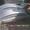 трансформаторы силовые трансформаторная сталь трансформаторное масло #694144