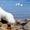 Кобель Пиренейской Горной Собаки для вязок #1510267